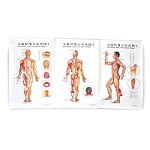 Body Charts (3 per set/laminated)